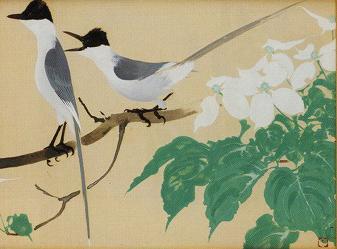田中一村「白い花と尾長」