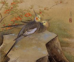 榊原紫峰「鸚哥図」